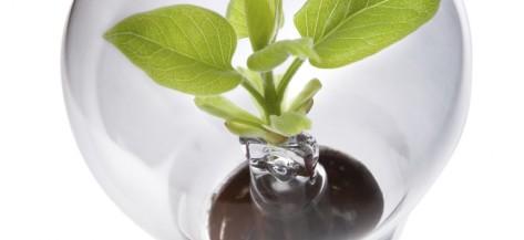 idea plant